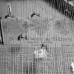 John Cage prepared piano
